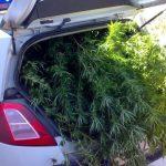A la cárcel por robar un coche de la guardia civil para trasladar su cosecha de marihuana
