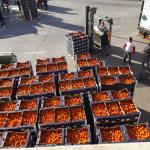 «Ya valen más los portes del camión que las naranjas»