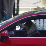 Mira cómo un perro 'aparca' un Audi A3 Sportback e-tron