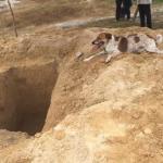 Un perro recorre tres kilómetros detrás de un coche fúnebre para despedirse de su dueña