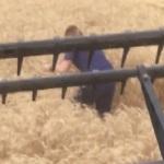 Una joven ve algo extraño durante la cosecha y manda detener la cosechadora