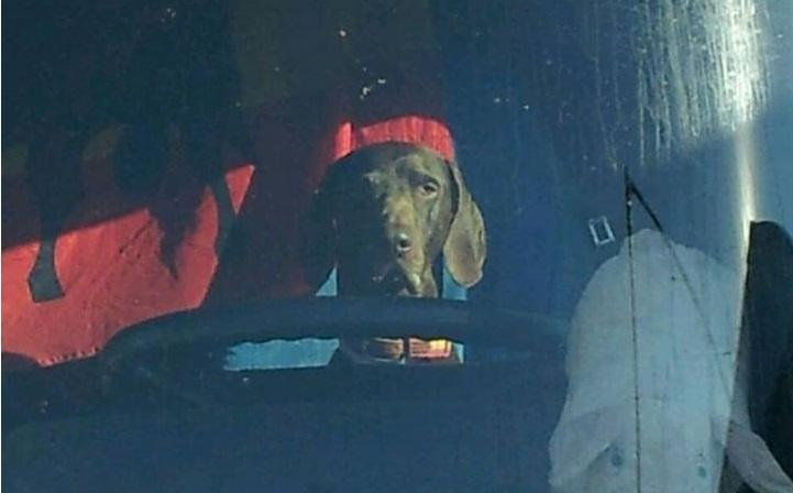 Cómo viajar con una mascota sin ser multado.
