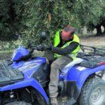 """Multas de 2.000 euros por usar """"quads"""" para recoger la aceituna"""