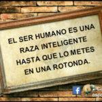 """El ser humano es una raza inteligente hasta que lo metes en una """"Rotonda"""""""