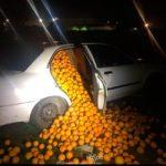 Detienen a cinco gitanos con 4000 kg de naranjas en el coche y alegan que son para consumo propio