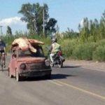 Saquean un camión de carne y huyen con la mercancía en el capó del coche