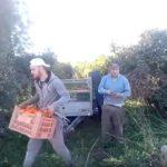 """""""Así me roban la cosecha"""": un agricultor pilla in fraganti a los ladrones en Torrent"""
