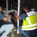Intervienen 170 kilos de marihuana en palés de lechuga en un camión que se dirigía de Málaga a Irlanda
