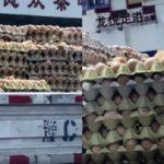 Nacen pollitos en un camión de huevos durante el transporte al supermercado – VÍDEO