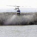 La prohibición de insecticidas multiplica las plagas agrícolas y las poblaciones de mosquitos