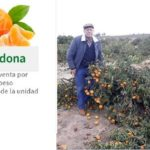 """Mientras Mercadona vende 4 mandarinas a 1€,  agricultores talan sus naranjos con la fruta en el árbol """"cansados de perder dinero"""""""