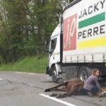 Un caballo herido grave, al ser atropellado por un camión en Seynod
