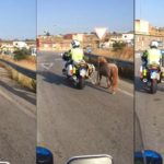 Un motorista de la Guardia Civil, saca a un poni atado a la moto de la autovía de Chiclana