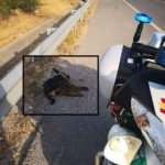 La emocionante carta de un Guardia Civil a los dueños de un perro muerto que había sido abandonado