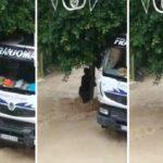 Un camionero socorre a una mujer atrapada por una riada, tras las lluvias torrenciales en el levante español