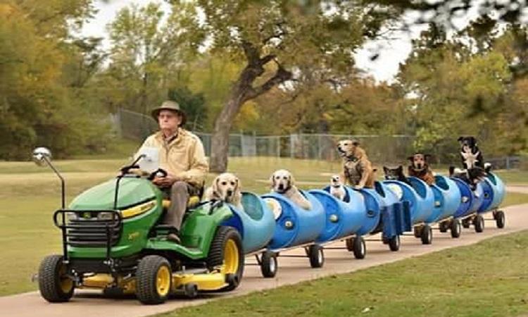 A sus 80 años, construyó un tren para pasear a perros rescatados de la calle