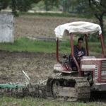 Se necesitan 2.000 jornaleros para la cosecha del ajo en Córdoba