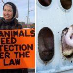 Creen que la muerte de una activista defensora de los cerdos, la provocó el camionero con premeditación