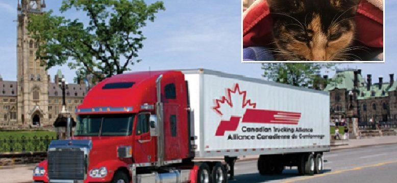 Conductor de camión ve un gato atropellado y se detiene a un costado de la carretera para salvar su vida
