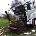 Heridos dos camioneros portugueses de Transwhite, al estrellarse contra un árbol en la D951