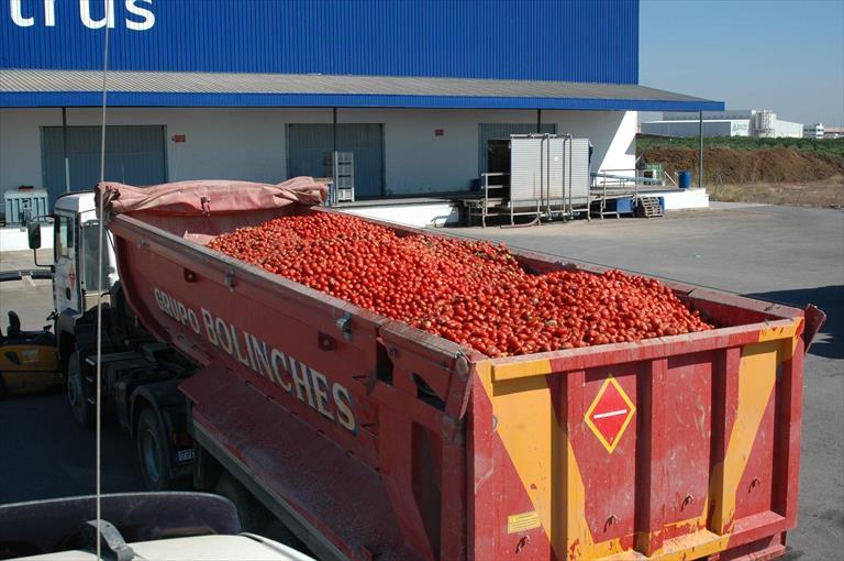 transporte de tomate e1438185303634 1