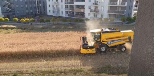 la cosechadora trabajando en medio yuOrnYLib 1256x620 1